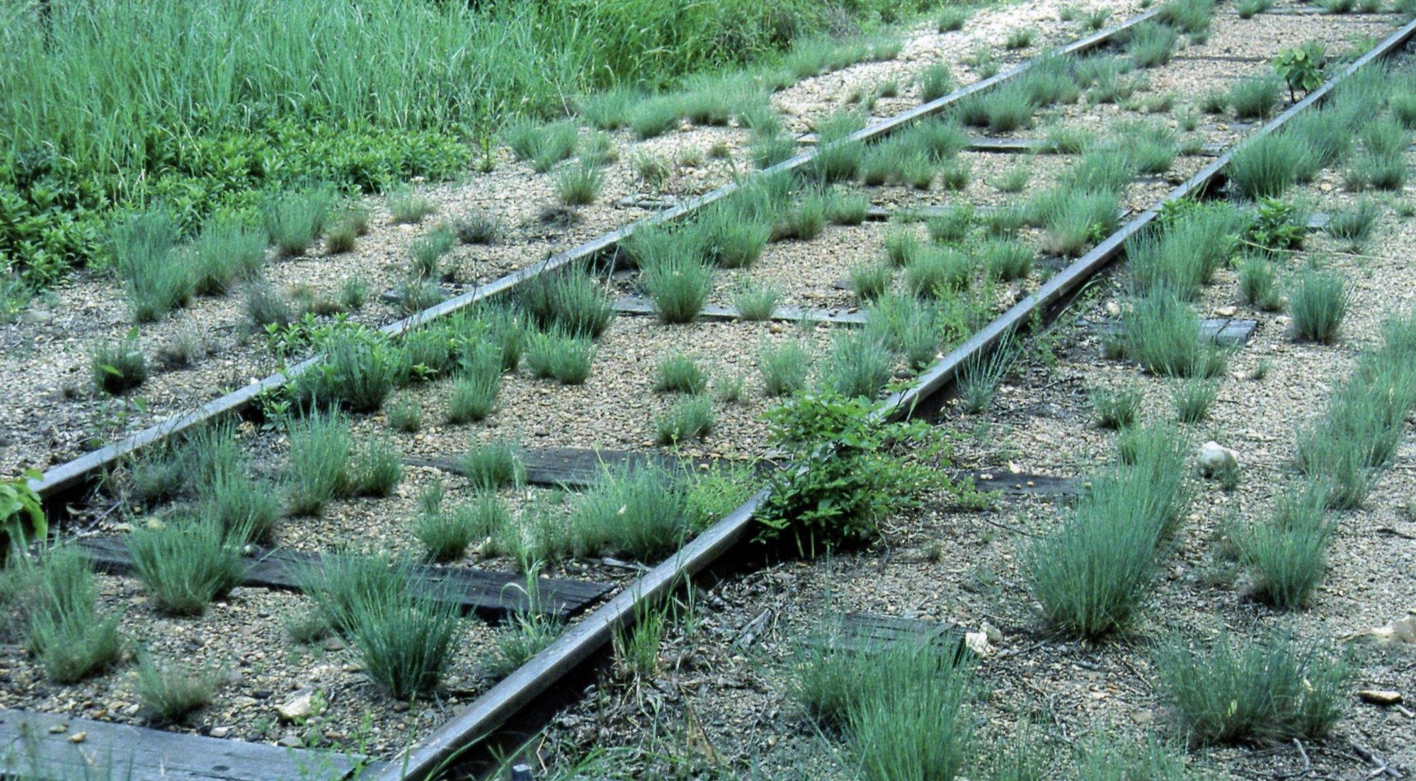 Voie faiblement armée (traverses espacées) sur une ligne à trafic restraint au sud du Loiret. L'herbe a envahi la plate-forme.