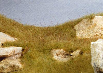 On distingue sur cette photo les différences de teinte et de hauteur de nos herbes et leur orientation.